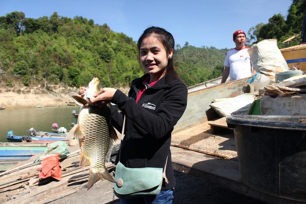 Laos Carp