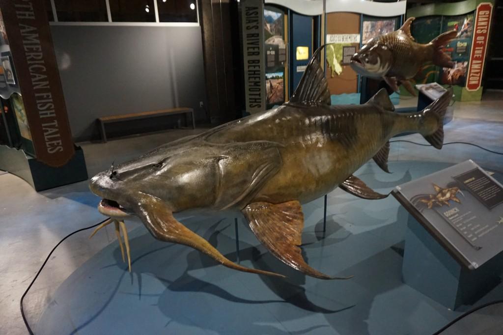 Lifesize crocodile fish