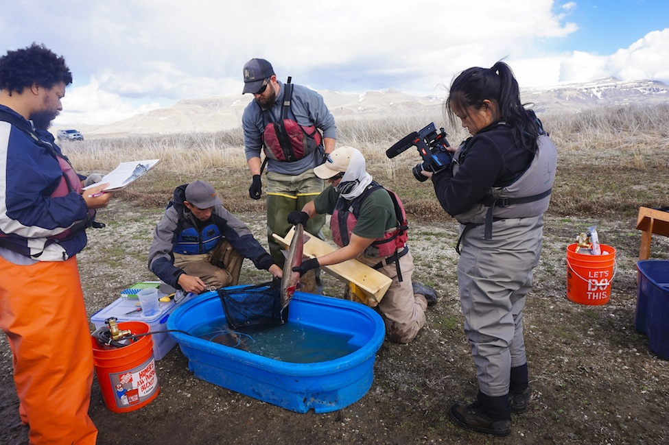 Measuring Lahontan Cutthroat Trout