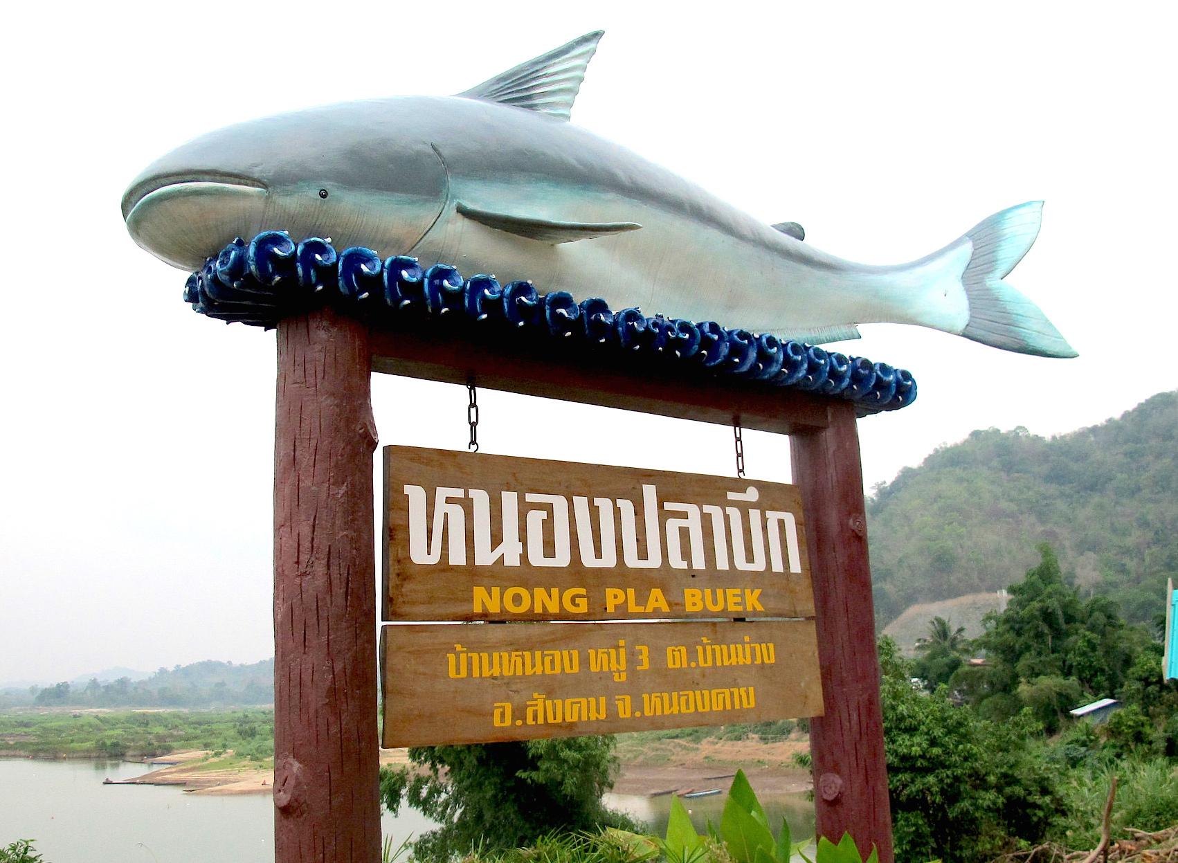 Mekong Catfish Signage
