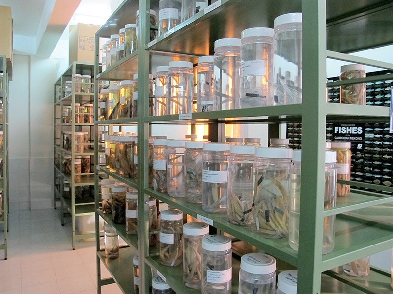 Mekong fish collection at Can Tho University, Vietnam