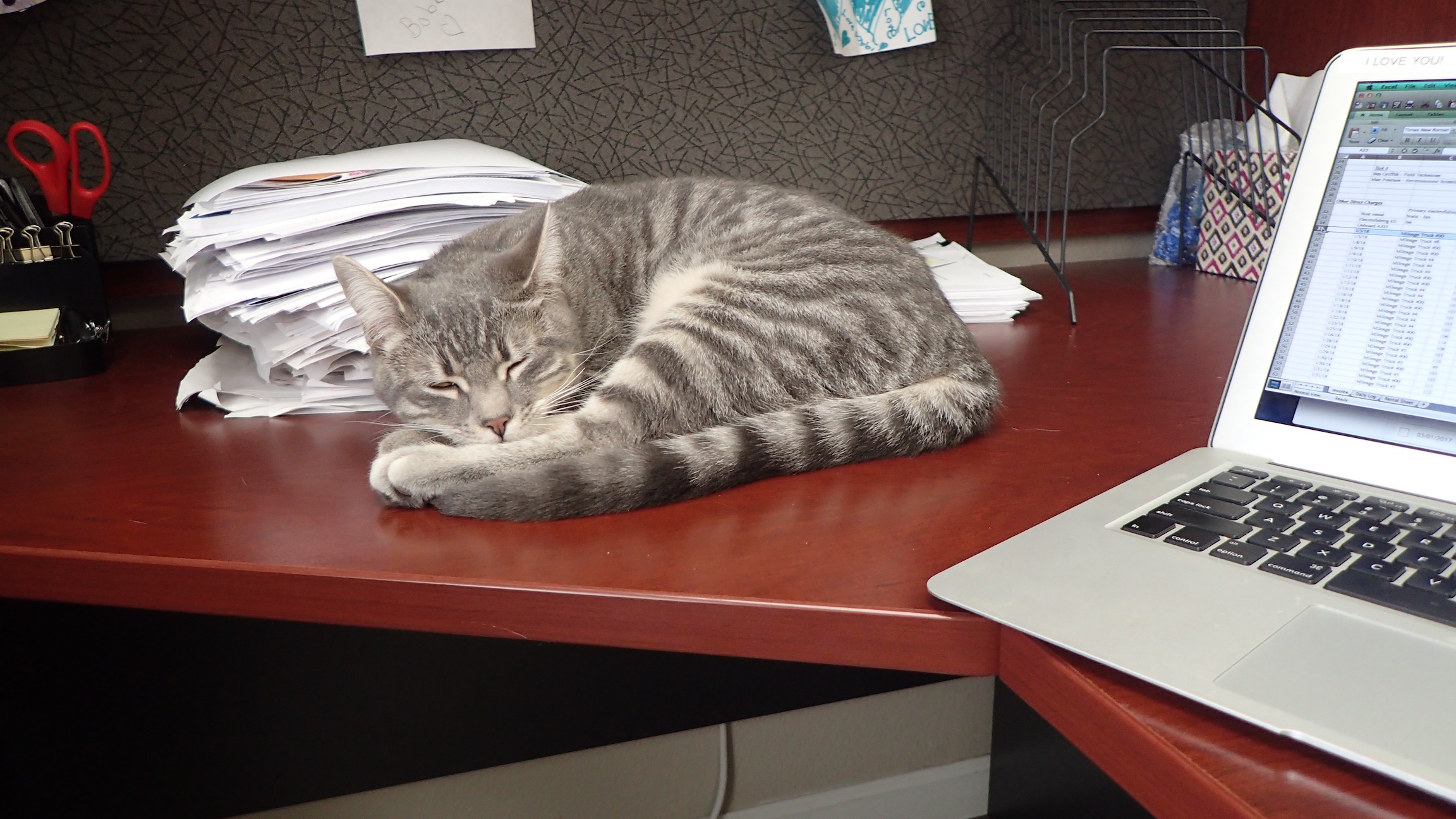 Mister kitten napping on desk