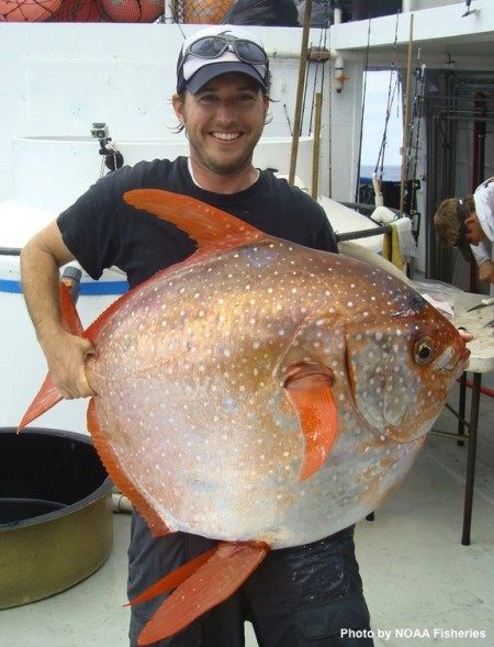 Opah in hand