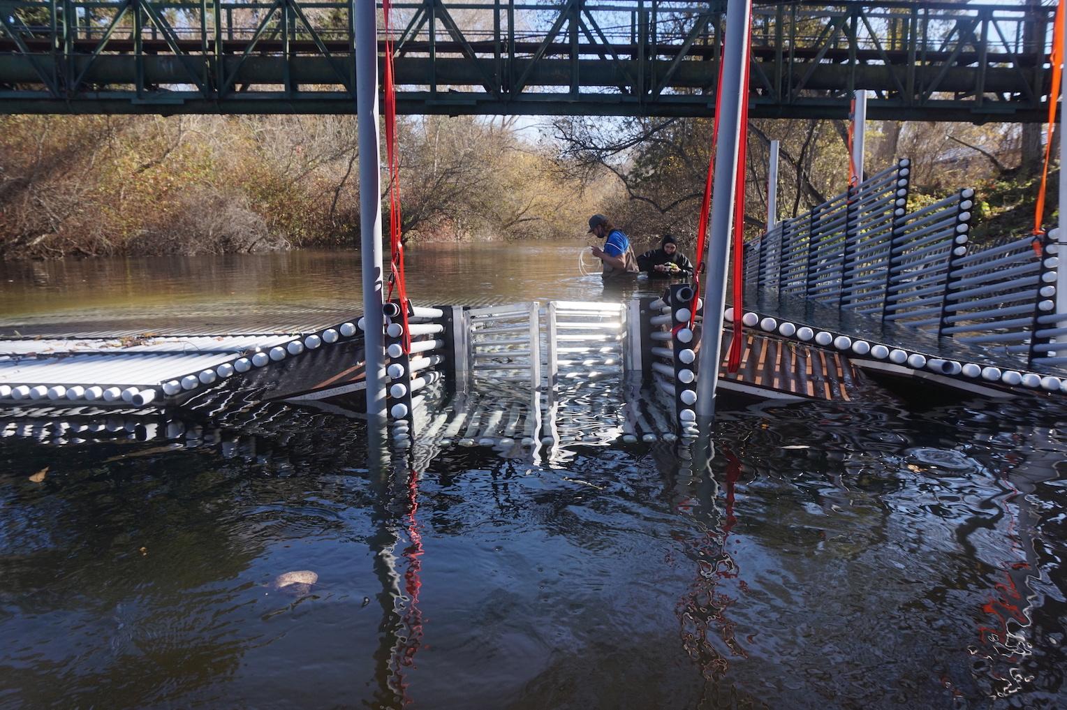 Passage structure for steelhead kelts on Carmel River weir