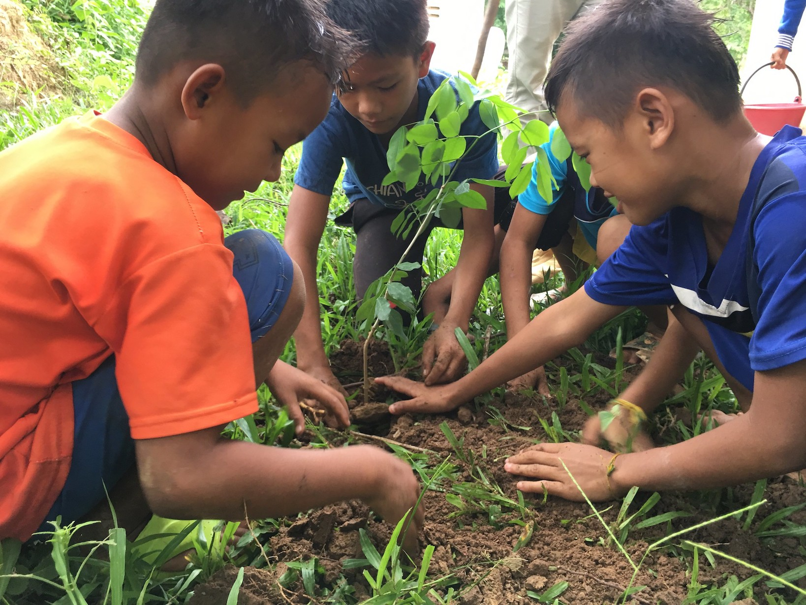 Planting fruit trees in Phalath
