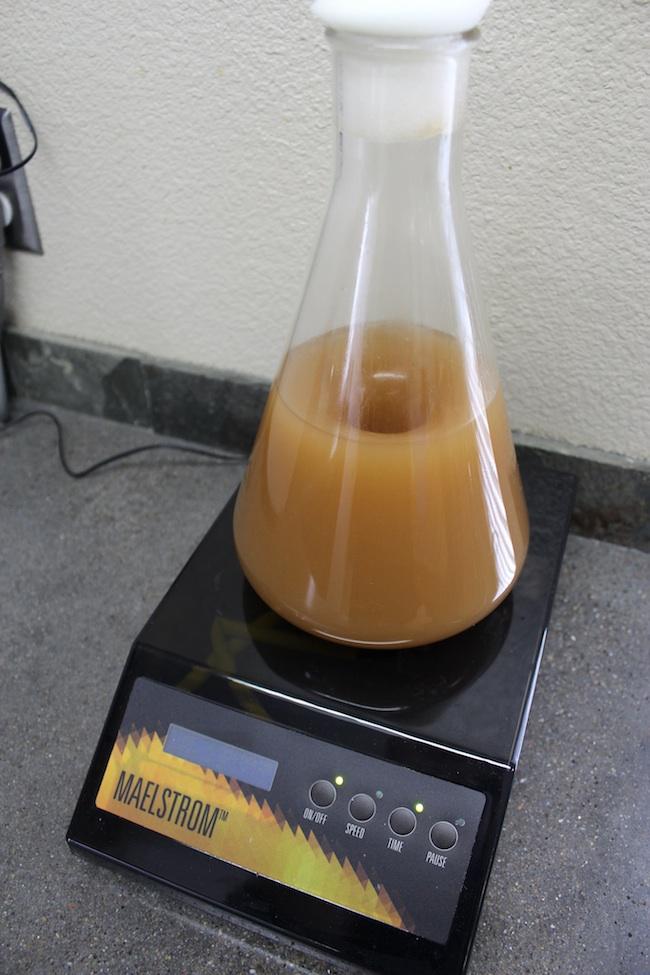 Propigating Yeast Cells
