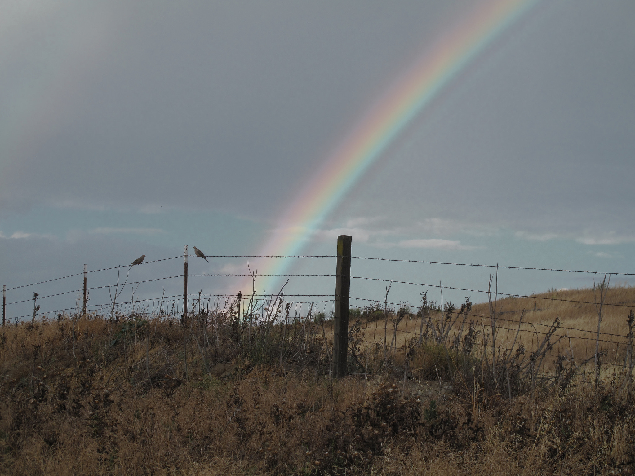 Rainbow and doves