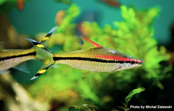 The aquarium fish free for all for Freshwater tropical fish for sale