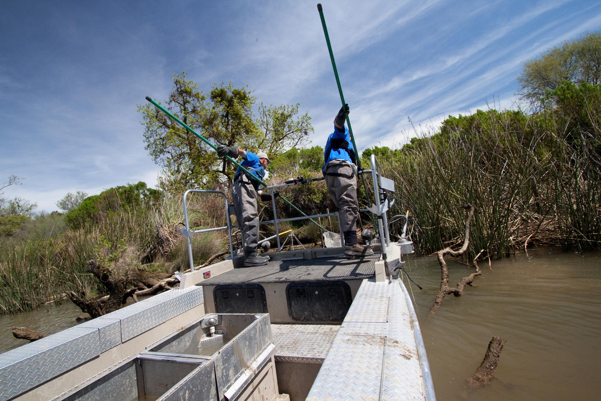 Sacramento River Electrofishing