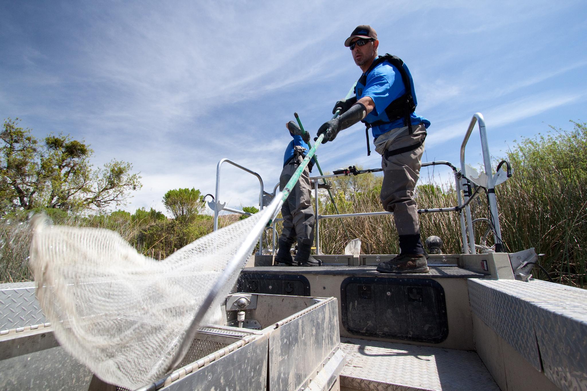 Sacramento River e-fishing