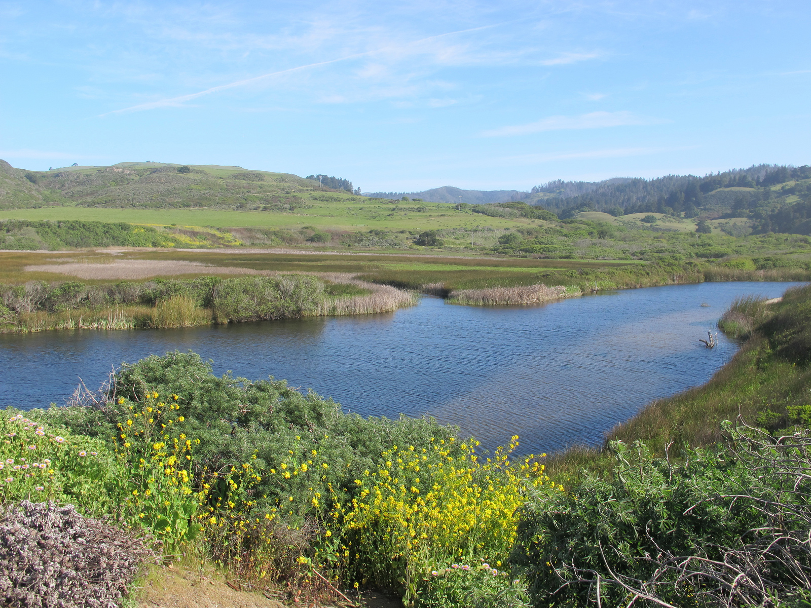Scott creek estuary