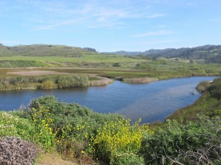 Scott creek estuary