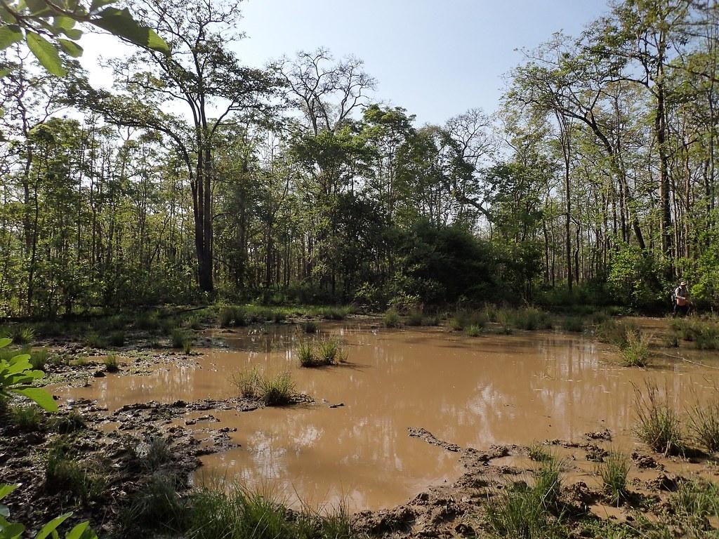 Seasonal Wetland