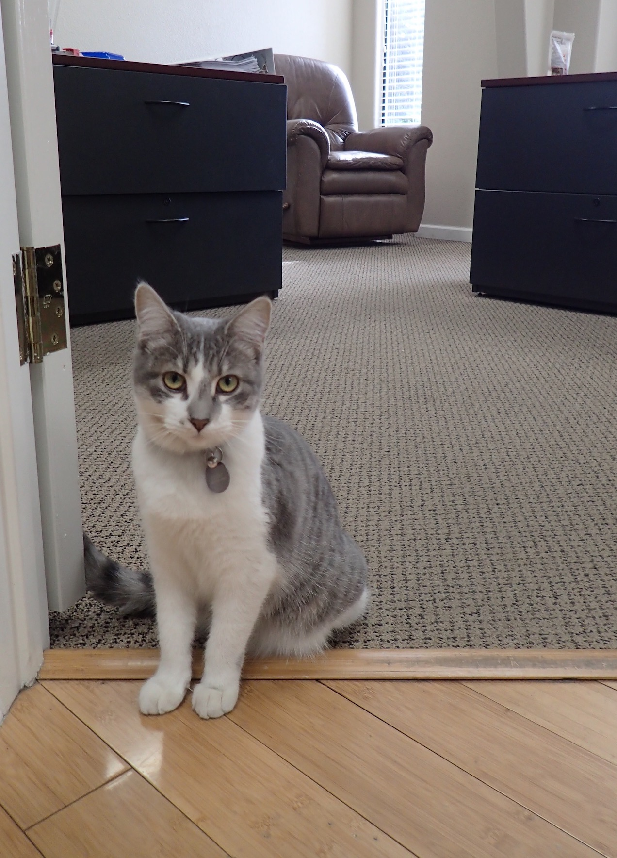 Sister kitten at the office