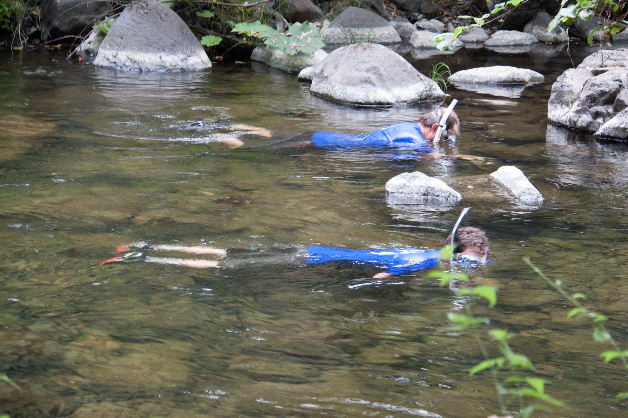 Snorkelers in sync on Big Chico Creek