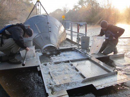 Stanislaus river rotary screw trap