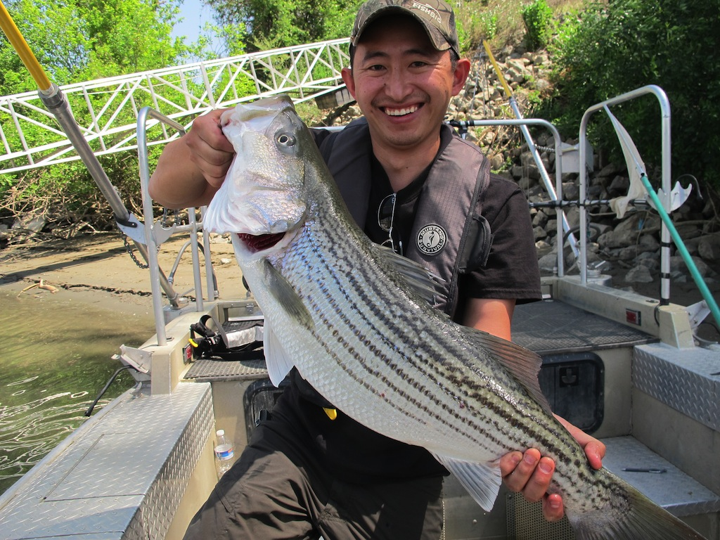 Striped bass catch