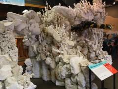Styrofoam Coral Reef