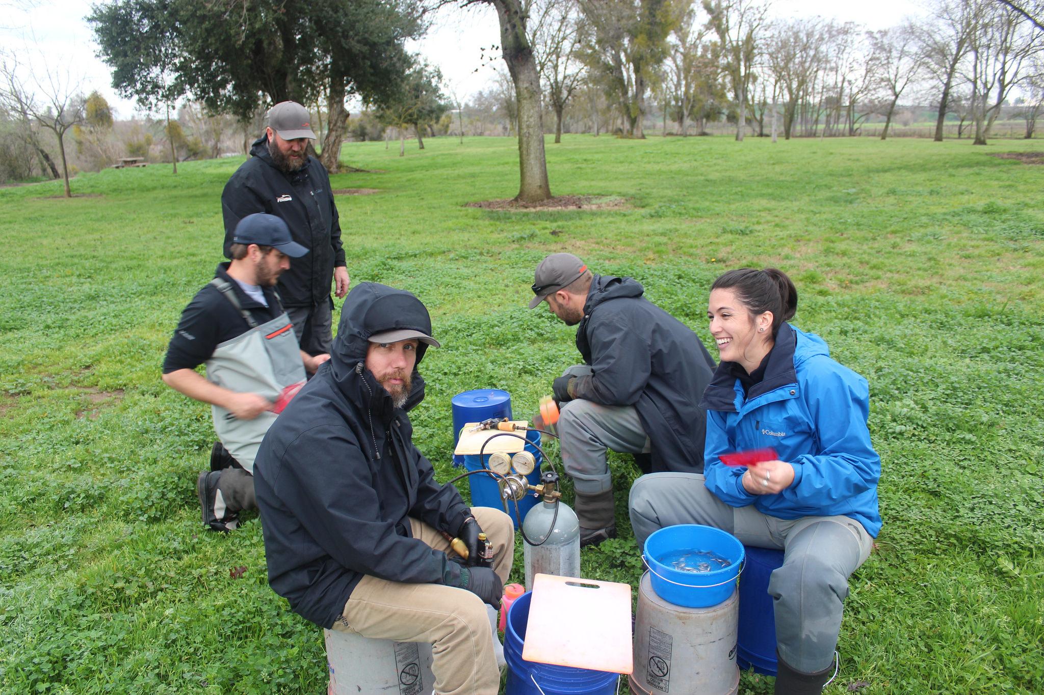 Team work marking juvenile salmon