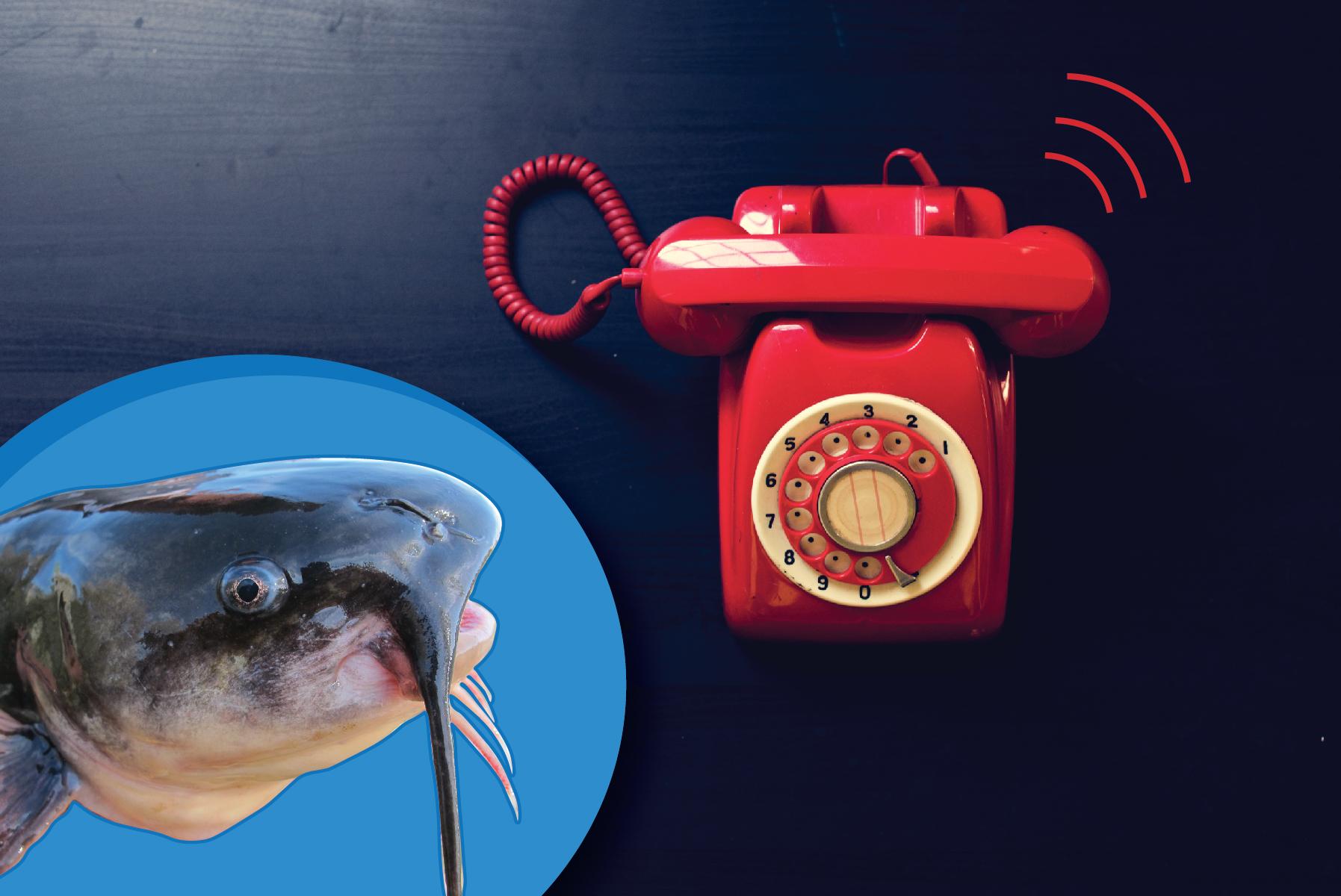 Telephoning Catfish