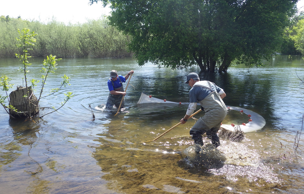 Tuolumne Floodplain seining