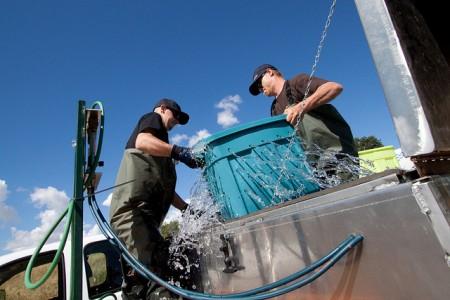 VAMP fish transport