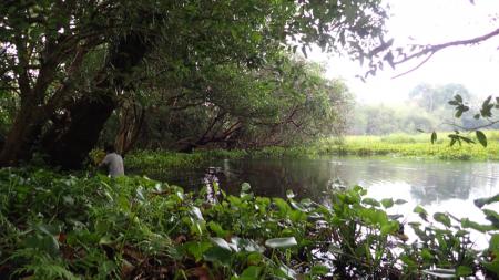 Wetland Survey