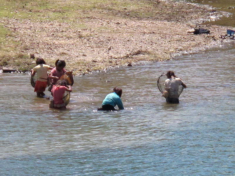 Child fishers harvesting with scoop nets