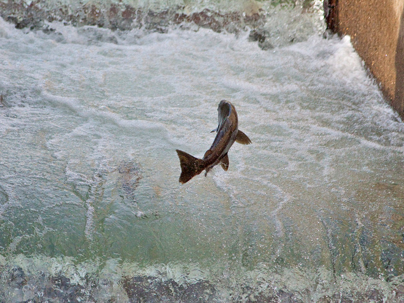 Environmental review of dfg hatchery and stocking for Fish and game stocking report
