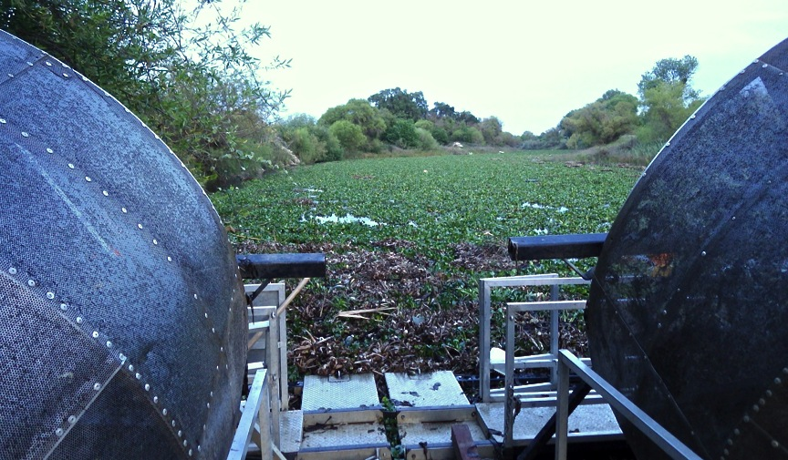 Water hyacinth swamping a rotary screw trap