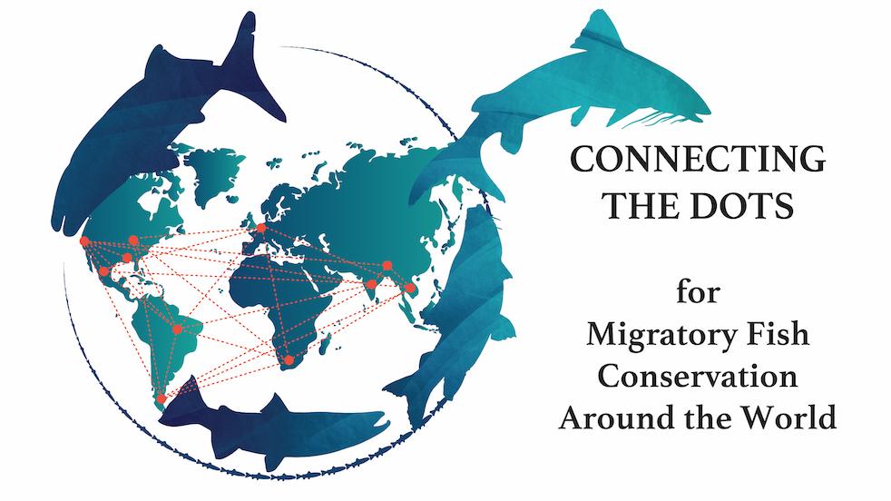 migratory fish flier