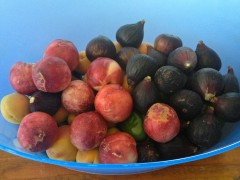Nectarines and figs