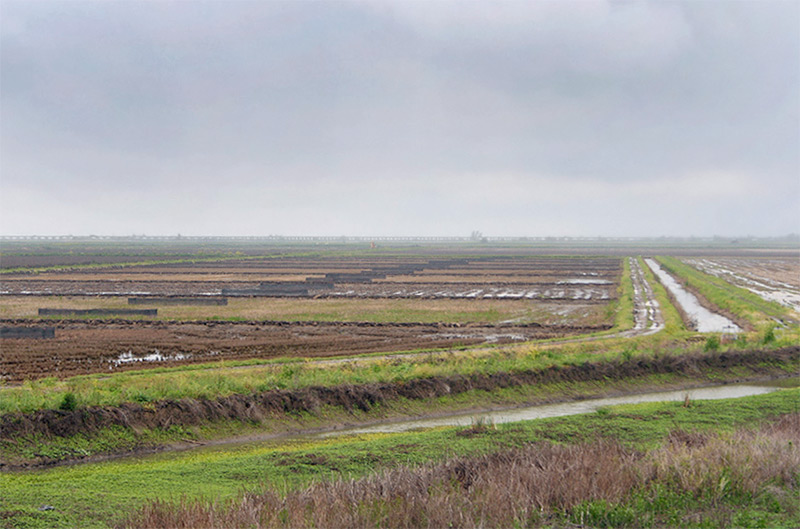 Nigiri Project on the Yolo Bypass