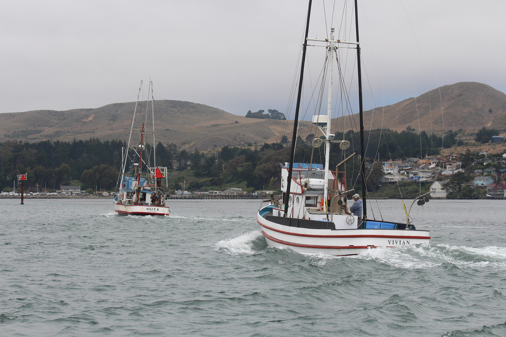 Comparing The Pacific Coast 39 S Commercial Fisheries