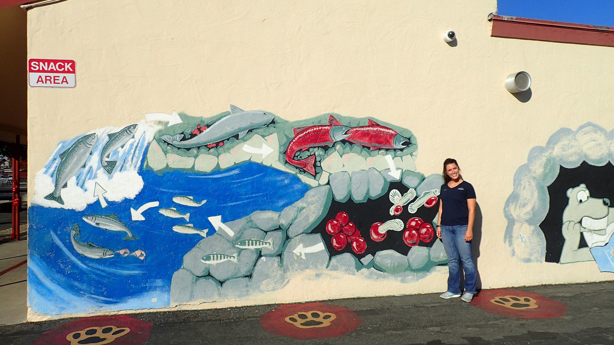 salmon life cycle mural