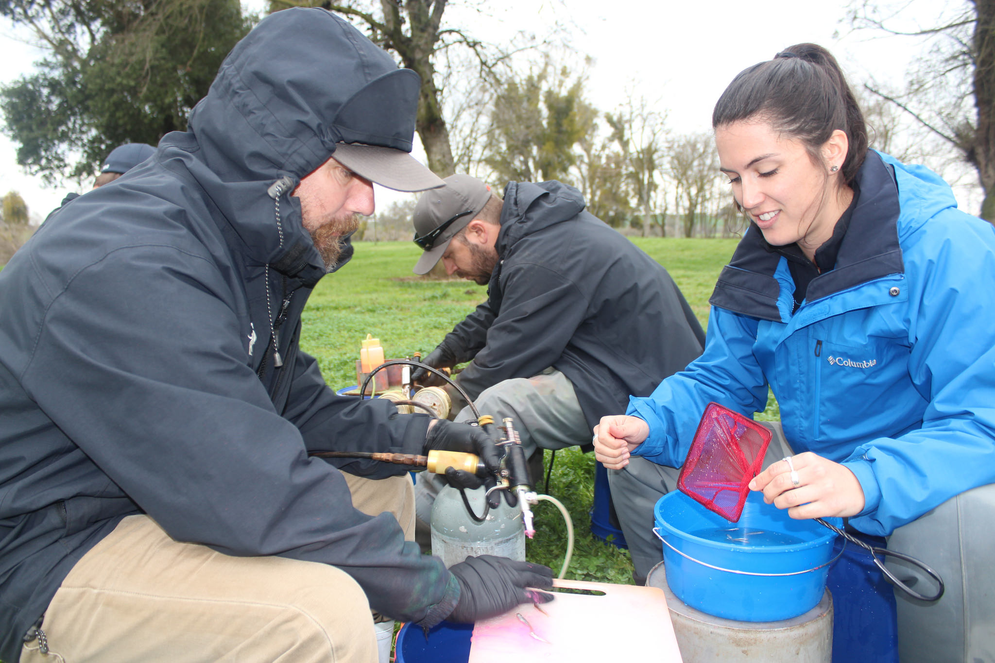 salmon marking team