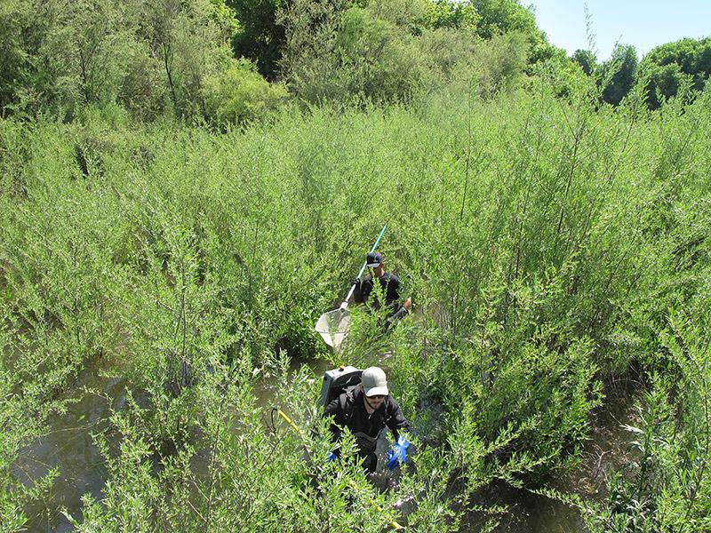 Navigating a seasonal thicket